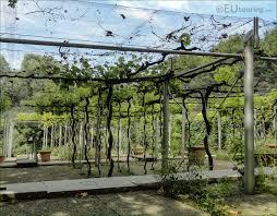 photos de pergola hd photos of jardin de la treille vineyard inside parc de la villette