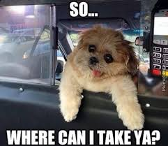 Dog Driving Meme - taxi driving dog nuff said by epicdragonmaster meme center
