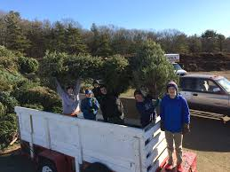 hingham tree drive troop 1 boy scouts will pick up your