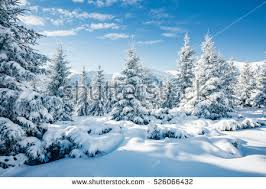 winter snow stock images royalty free images vectors