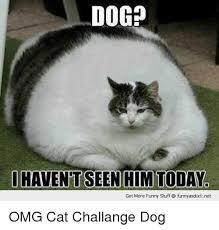 Dog And Cat Memes - oogp get more funny stuff funnyasducknet omg cat challange dog