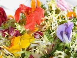 les fleurs comestibles en cuisine fleurs comestibles profitez de leurs beautés au jardin et dans l