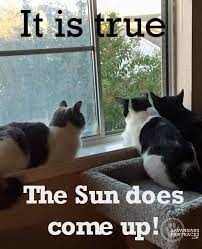 Friday Cat Meme - they are here friday cat memes savannah s paw tracks