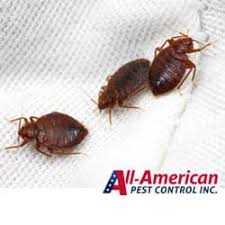 What Do Exterminators Use To Kill Bed Bugs How To Kill Bed Bugs Q U0026a With All American