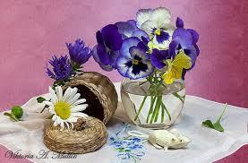 flower flowers daises seek blue soft hide flower wallpaper high