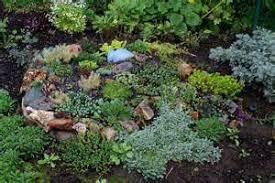Rock Garden Cground Sedum Rock Garden Assortments Tray Moonshine Designs Nursery