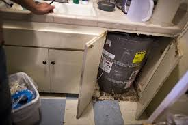 How Do You Get Rid Of Mold In A Basement by Faq What You Need To Know About Mold And Cockroaches In The Home