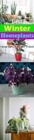 best winter houseplants u0026 how to take care of indoor plants in