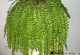 Low Light Indoor Trees Low Light Indoor Plant List 20 Houseplants That Are Easy To Grow
