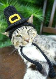 60 best thanksgiving and cats images on