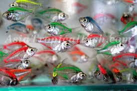ornamental fish exporters tropical fish for sale to aquarium fish