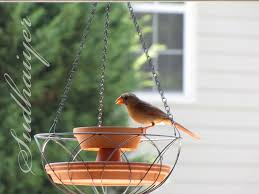 Diy Hanging Planter by Diy Wild Bird Hanging Planter Petdiys Com