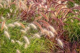 best ornamental grasses for your yard