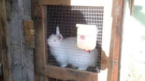 12 free rabbit hutch plans and designs