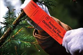Cutting Christmas Tree - valley journal christmas tree cutting on national forest land a