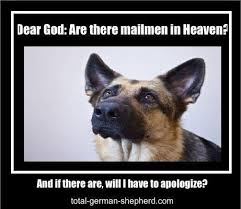 German Shepherd Memes - german shepherd meme