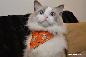 cat halloween picture cat bandana puppy bandana skulls kerchief bib bandana for cats
