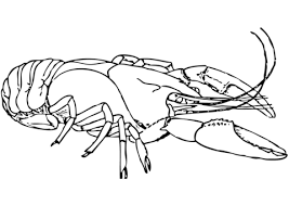 american lobster coloring page free printable coloring pages
