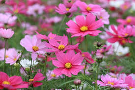 blooms flowers 12 low maintenance flowers you can t kill mnn nature