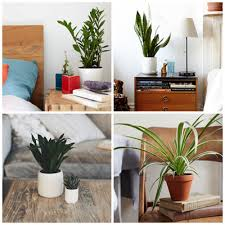 Plant Lights How To Choose by How To Choose A Houseplant And Keep It Alive Low Lights
