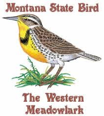 Montana Birds images Birds embroidery design montana state bird from bella mia designs jpg