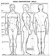 Anatomy Of Human Body Sketches Male Proportion The Body Width U003d 2 1 3 Heads The Body Height