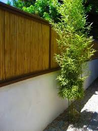 best 25 bamboo fencing ideas on pinterest bamboo fencing ideas