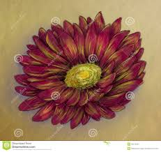 red daisy pencil sketch stock images image 32272604