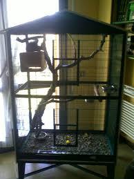 gabbie scoiattoli guida per scoiattoli
