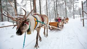 reindeer rides santa claus village visit rovaniemi