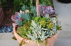 planter for succulents 10 unforgettable succulent planter arrangements
