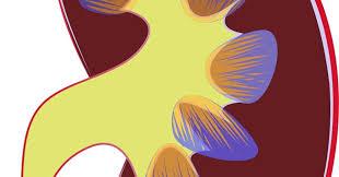 leucociti a tappeto come leggere gli esami di urina in gravidanza quali sono i rischi