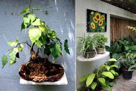 Indore Plants 10 Easy To Achieve Designer Touches For Your Garden Homeonline