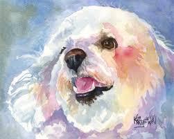 d douglas bichons frise bichon frise art print of original watercolor painting 11x14 dog