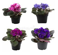 potted flowers potted flowers stock image image of isolated green 16815923