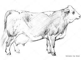 cow cow sketch dairy cow pencil sketch animal farm simmental