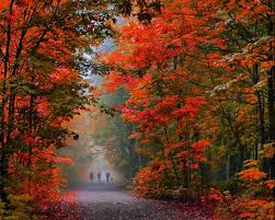 spirit halloween burlington nc morning walk in autumn burlington ontario by andrzej pradzynski