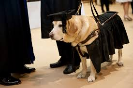 dog graduation cap and gown johns awards honorary master s degree to adorable service