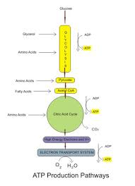 aerobic cellular respiration stages equation u0026 products video