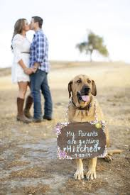 christmas picture ideas for couples with dogs best images