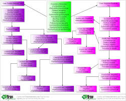 draw anywhere unknown microorganisms create flow chart online