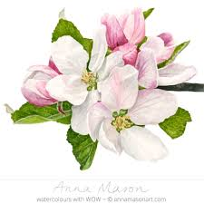 how to paint a rose flower in watercolour anna mason art