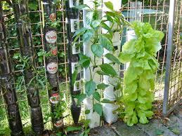 vertical garden bottles write teens