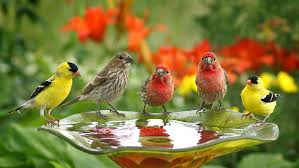bird wallpapers birds wallpapers cute birds drink water wallpapers13 com