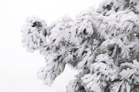 free photo slovakia winter snow country nature icicles tree max