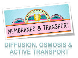 diffusion osmosis u0026 active transport ppt video online download