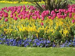 immagini di giardini fioriti giardini fioriti giardinaggio
