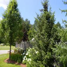 cavan landscaping gardens decks and pools