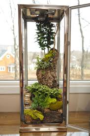 219 best indoor gardens images on pinterest plants gardening