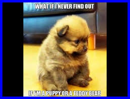 Cute Puppy Meme - astonishing meme template flip of cute puppy trend and love concept